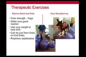 Canine rehabilitation exercises post PRP injection